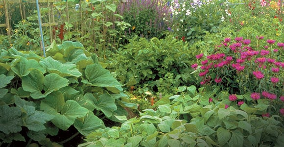 Companion planting the tennessee magazine for Large vegetable garden