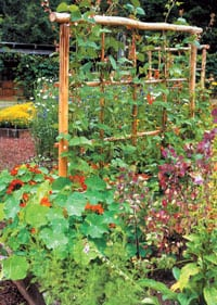 Plants grown vertically cast a shadow. Running your trellis in an east-to-west direction on the north side of your garden creates optimal light exposure for trellised plants while casting the shortest shadow on the garden.