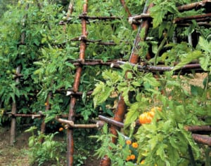 Eight- to 10-foot poles made of willow branches form this teepee-style trellis. The frame is wrapped in string, chicken wire or netting to provide a surface for vines to climb.