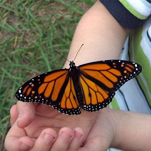 An orange monarch rests on a young visitor to Lichterman Nature Center. Source: Lichterman Nature Center, Memphis