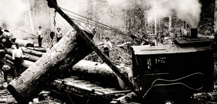 Before the national park, large parts of the Smokies were clear-cut