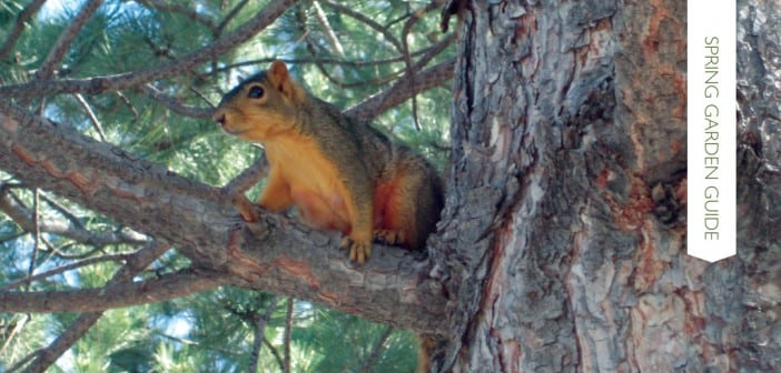 Outwitting the squirrels