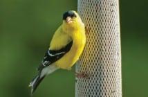 birdcover2