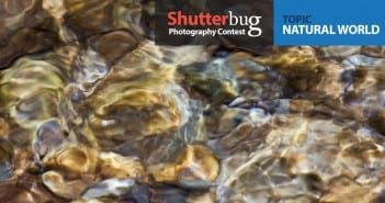 shutterbug1
