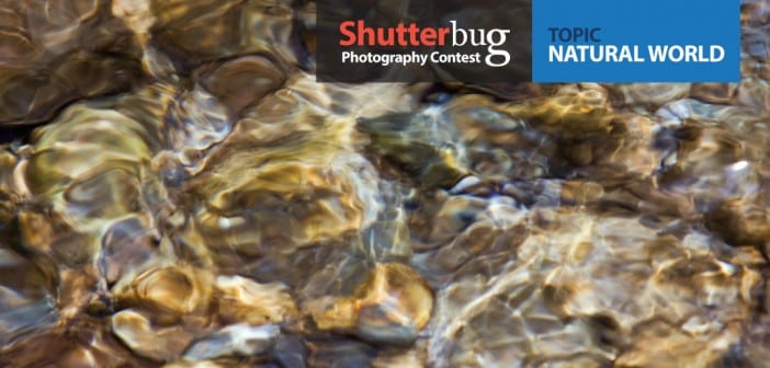 Shutterbug Contest – Natural World
