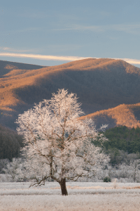 Morning's sun paints the top of a frost-covered tree and distant mountains in warm sunlight at the beginning of a cold day in Cades Cove of Great Smoky Mountains National Park.