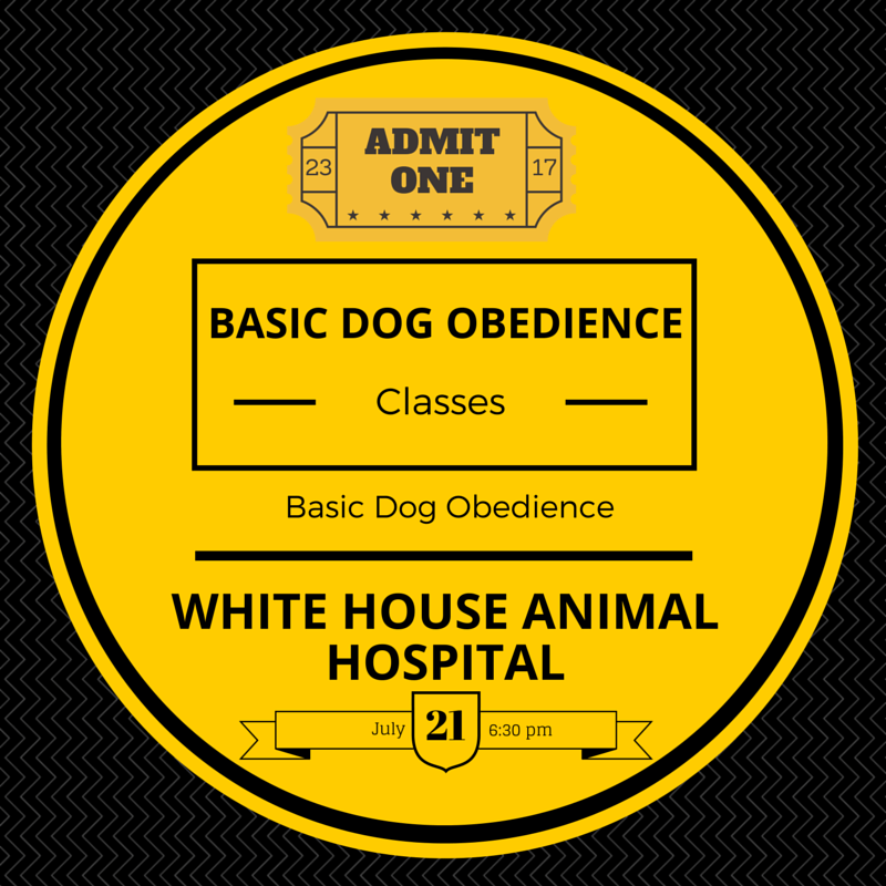 Dog Obedience Training Tennessee