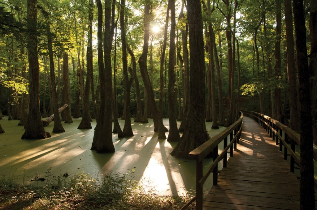 Cypress swamp at milepost 122 along the Natchez Trace