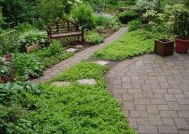 Experts offer garden design ideas