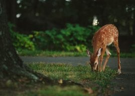 Attracting Animals to Your Garden