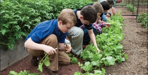 Sprouting Young Gardeners at Home